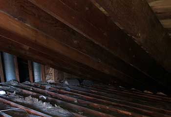 Rodent Proofing in Cornell | Attic Cleaning Thousand Oaks