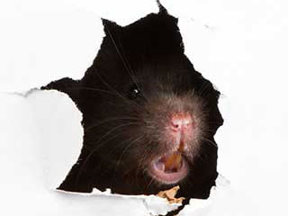 Rodent Proofing Service | Attic Cleaning Thousand Oaks, CA